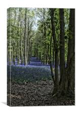 Bluebells in Forest, Canvas Print