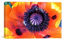 Centre Of The Poppy, Canvas Print