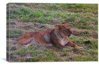 Lioness Watching Over Her Cubs, Canvas Print