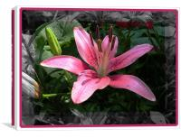 Lily , Canvas Print