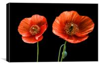painted poppies, Canvas Print