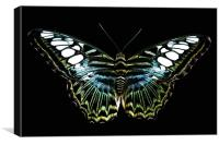 blue clipper, Canvas Print