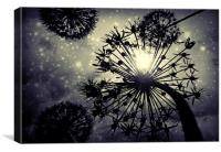Allium sky, Canvas Print