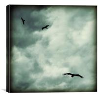 eagles and storm clouds, Canvas Print