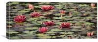 vintage waterlilies, Canvas Print