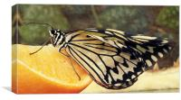 tree nymph on orange, Canvas Print