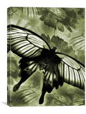 antique butterfly, Canvas Print