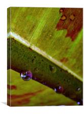 reflections in a water droplet, Canvas Print