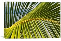 Palm frond at the beach, Canvas Print