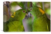 two yellow naped parrots, Canvas Print