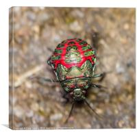 colorful beetle, Canvas Print