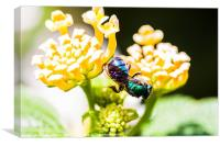 green and blue bee, Canvas Print