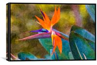 bird of paradise with paint effects, Canvas Print