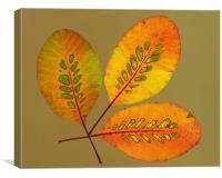 Patterned Leaves, Canvas Print