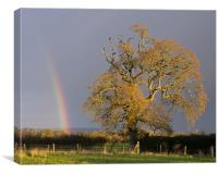 Rainbow and Oak tree in Willand, Canvas Print