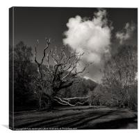 Trees in Hisley wood, Canvas Print