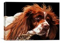 Springer spaniel, Canvas Print
