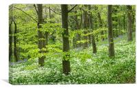 Wild garlic and blue bells, Canvas Print
