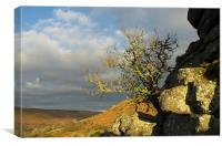 Lone tree on Bonehill Rocks, Canvas Print