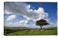 Lone tree on Bodmin Moor, Canvas Print