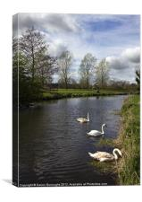 Swans On The Stour, Canvas Print