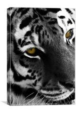 Old yellow eyes, Canvas Print