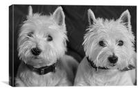 Two West Highland White Terriers, Canvas Print