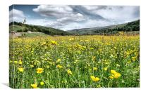 Dalescapes:  Gunnerside Buttercups, Canvas Print
