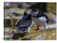 Puffins In Love, Canvas Print