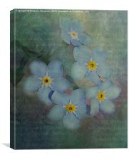 Forget-Me-Not Delight., Canvas Print
