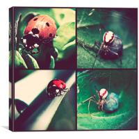 Ladybirds And Spiders., Canvas Print
