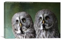 Double Take, Pair of Owls, Canvas Print