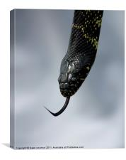 Snake, Eagle Heights, Canvas Print