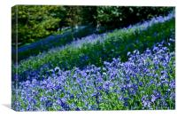 A Carpet of Bluebells, Canvas Print