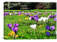 Park Bench & Crocus, Canvas Print