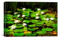 The lily pond #2, Canvas Print