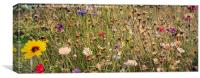 Wildflowers, Canvas Print