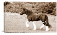 Alot of Trot, Canvas Print