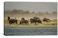 Water Buffalo on the Banks of the Ganges, Varanasi, Canvas Print