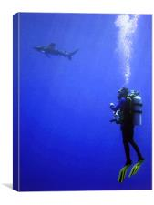 Watching the Oceanic Whitetip Shark, Canvas Print