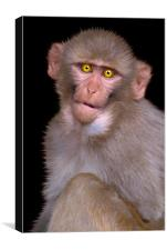 Young Rhesus Macaque Paintover Effect, Canvas Print