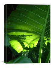 Shadows on a Back-lit Green Tropical Leaf, Laos, Canvas Print