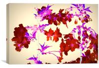 Abstract Cherry Blossom, Canvas Print
