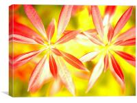 Forest Flame II, Canvas Print