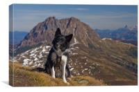 Border Collie in the mountains, Canvas Print