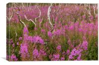 Fireweed , Canvas Print