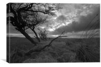 Wilderness at Divis and Black Mountain, Canvas Print