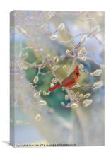 CARDINAL IN THE PUSSY WILLOWS, Canvas Print