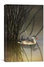 HIDING IN THE REEDS, Canvas Print
