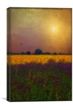 SUNSET IN THE MEADOW, Canvas Print